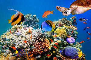 Фотопечать - Подводный мир - 25025