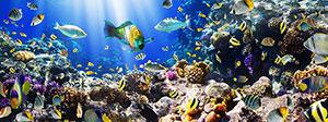 Фотопечать - Подводный мир - 25026