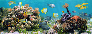 Фотопечать - Подводный мир - 25027