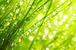 Фотопечать - Природа - 25368