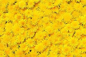 Желтые изображения - 25358