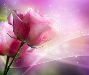 Розовые изображения - 25308