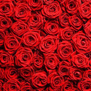 Красные изображения - 25291