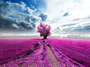 Розовые изображения - 25242