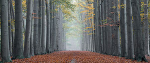 Фотопечать - Природа - 25237