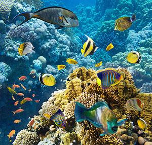 Фотопечать - Подводный мир - 25216