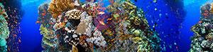 Фотопечать - Подводный мир - 25192