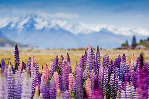 Фиолетовые изображения - 25163