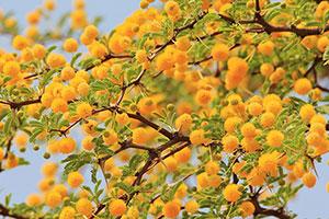 Желтые изображения - 25135