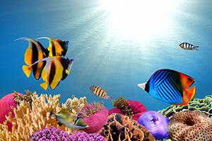 Фотопечать - Подводный мир - 25659