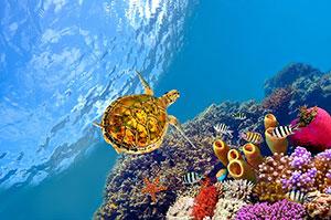 Фотопечать - Подводный мир - 25657
