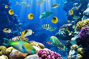 Фотопечать - Подводный мир - 25653