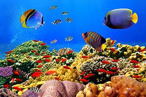 Фотопечать - Подводный мир - 25641