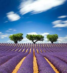 Фиолетовые изображения - 25629