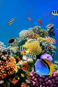 Фотопечать - Подводный мир - 25625