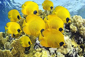Фотопечать - Подводный мир - 25623