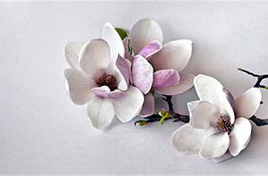 Фотопечать - Цветы - 25717