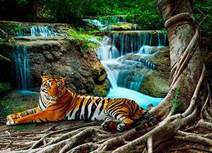 Фотопечать - Животные - 25710