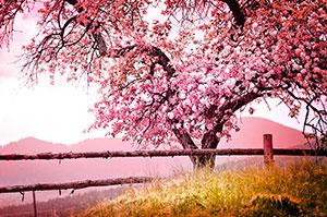Розовые изображения - 25803