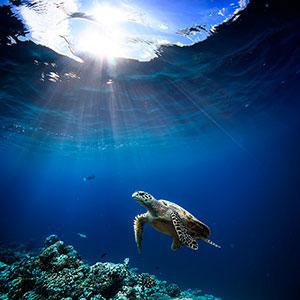 Фотопечать - Подводный мир - 25784