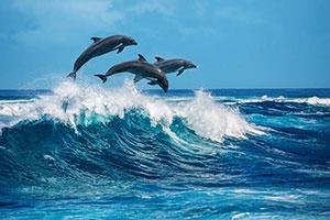 Фотопечать - Море и пляж - 25771