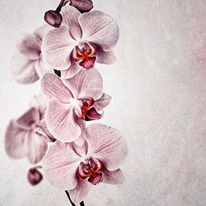 Розовые изображения - 25877