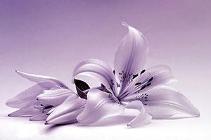 Фиолетовые изображения - 24001