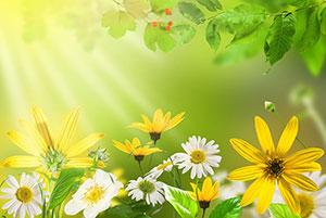 Зеленые изображения - 24004