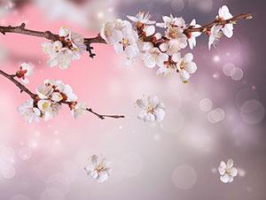 Розовые изображения - 24010