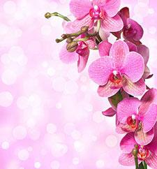 Розовые изображения - 24025