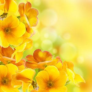 Желтые изображения - 24046
