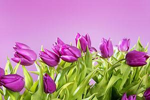 Фиолетовые изображения - 24054