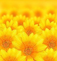 Оранжевые изображения - 24066