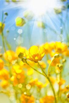 Желтые изображения - 24069