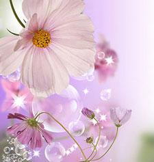 Розовые изображения - 24078
