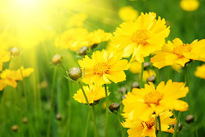 Желтые изображения - 24084