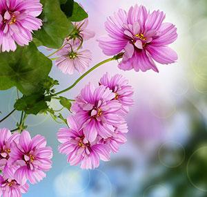 Фиолетовые изображения - 24089