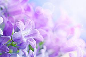 Фиолетовые изображения - 24092