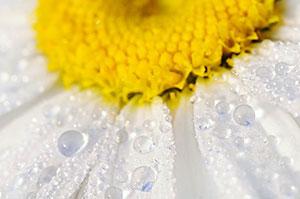 Желтые изображения - 24096