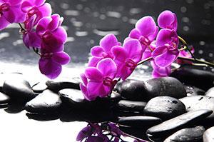 Розовые изображения - 24099
