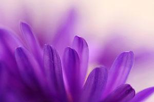 Фиолетовые изображения - 24101