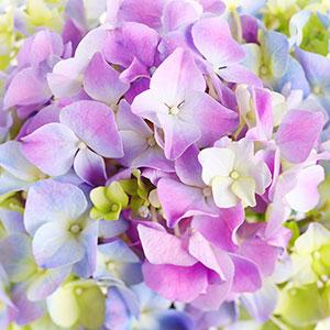 Фиолетовые изображения - 24106