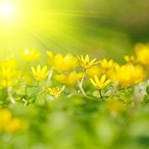 Желтые изображения - 24114