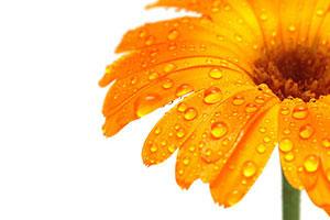 Оранжевые изображения - 24117