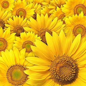 Желтые изображения - 24118