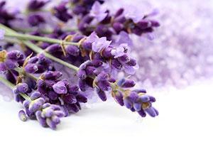Фиолетовые изображения - 24131