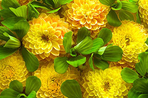 Желтые изображения - 24133