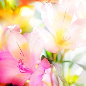 Розовые изображения - 24145