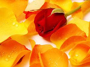 Оранжевые изображения - 24157