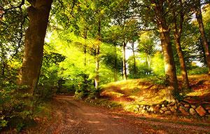 Зеленые изображения - 24259
